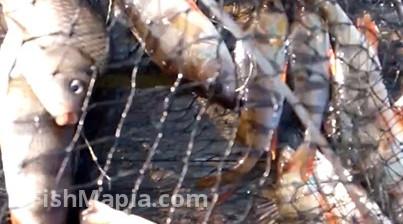 Ставки на Ивонченцах, карта, рыбалка