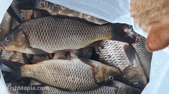 Затишне, карта, рыбалка