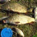 Шпакове, карта, рыбалка