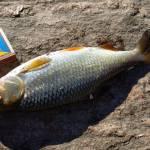 Каменно-Зубиловка, карта, рыбалка