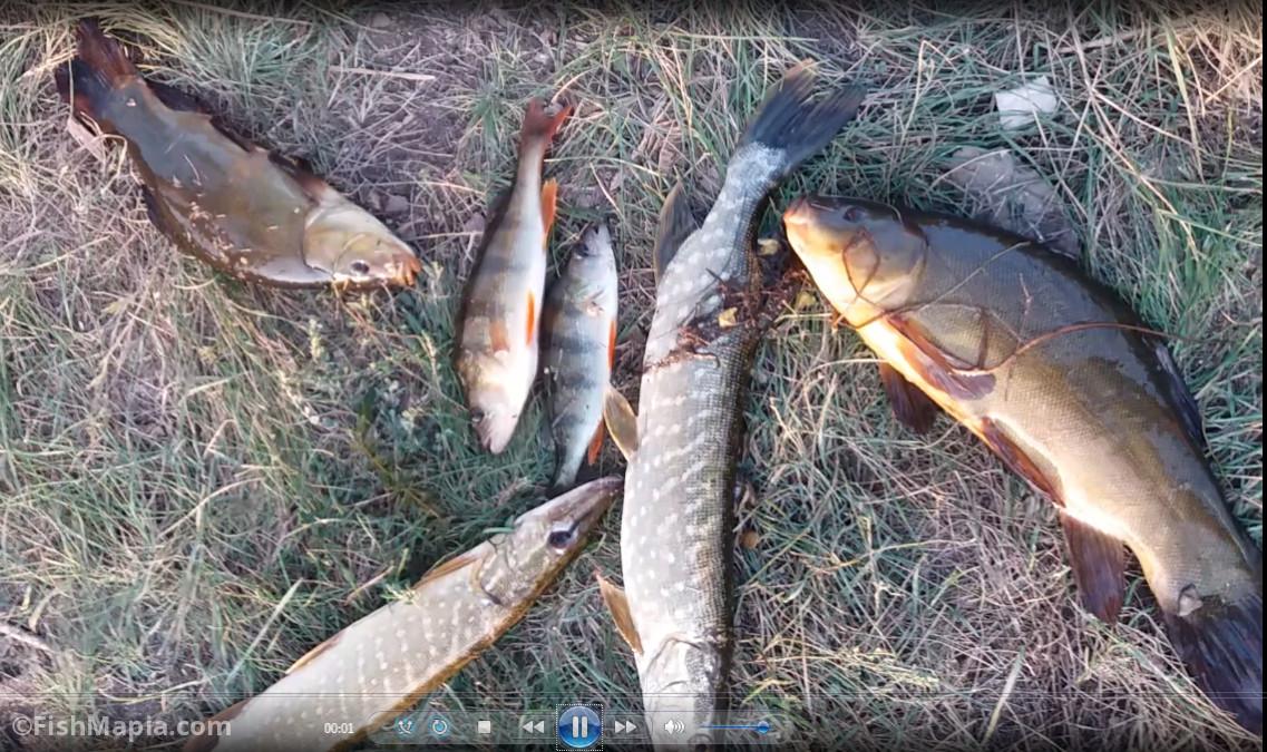 Артековская плотина, карта, рыбалка