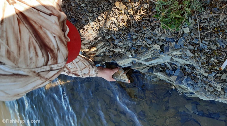 Ребриково (плотина), карта, рыбалка