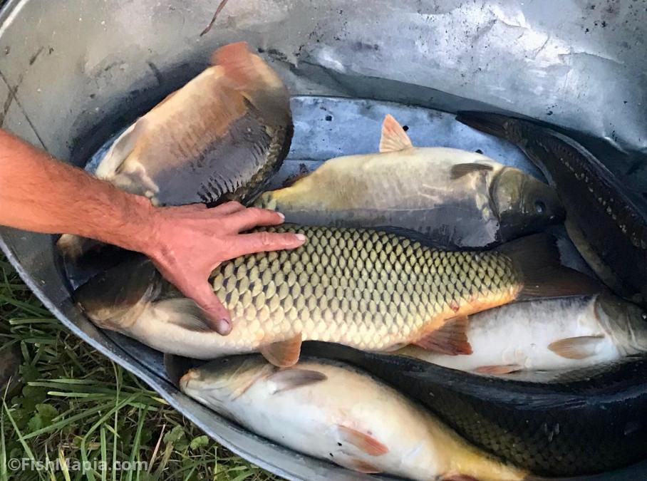 Рибалка на озері Дар, карта, рыбалка